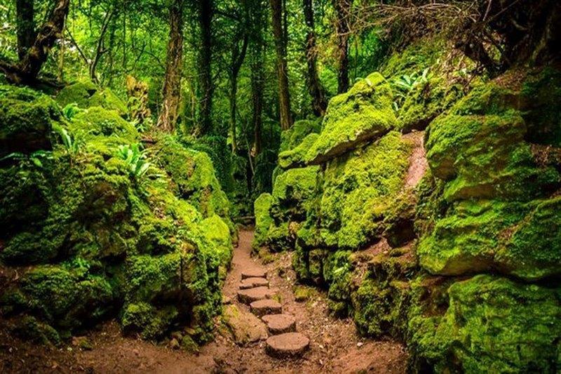 Khu rừngPuzzlewood đẹp như chốn tiên cảnh nhưng cũng hết sức bí ẩn